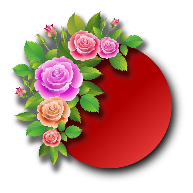Roses flowers spring, emotions.