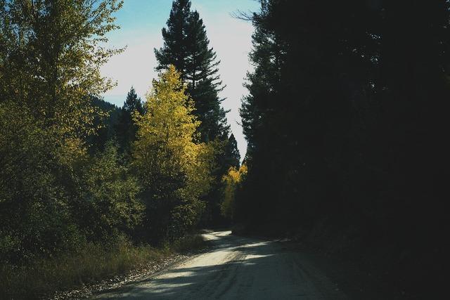 Rural road trees, transportation traffic.