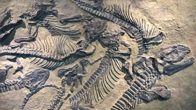 Sachsen fossils castle.