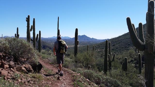 Saguaro cactus cacti hiking.