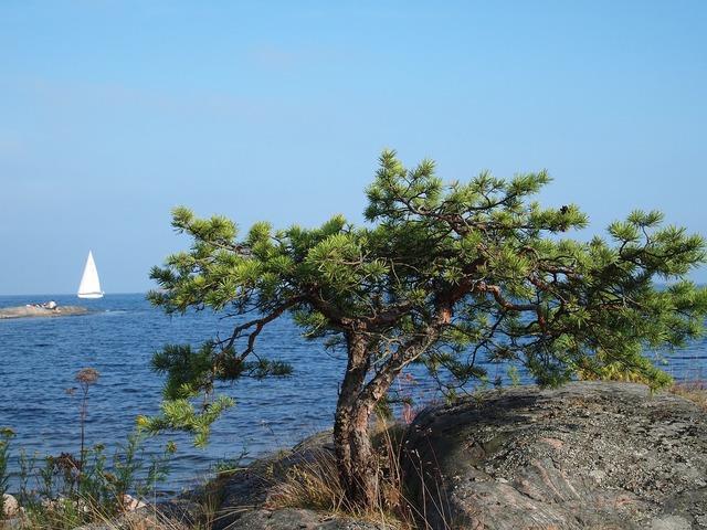 Sail archipelago sweden.