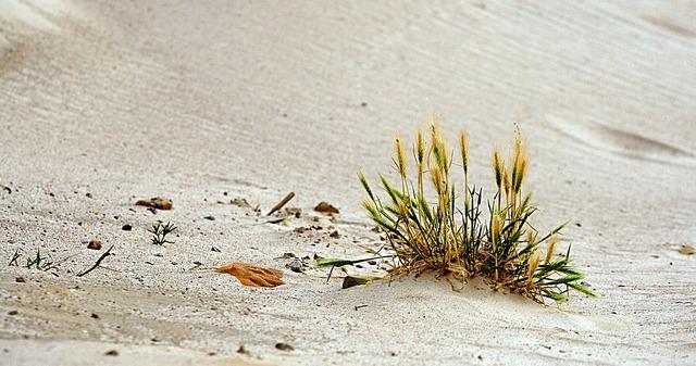 Sand beach grass, travel vacation.