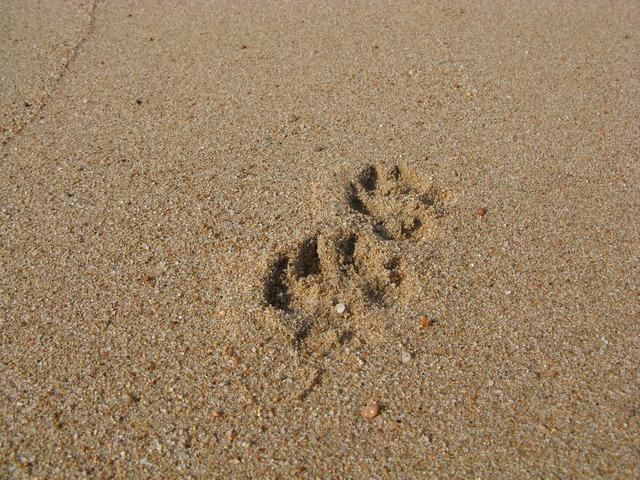Sand beach reprint, travel vacation.