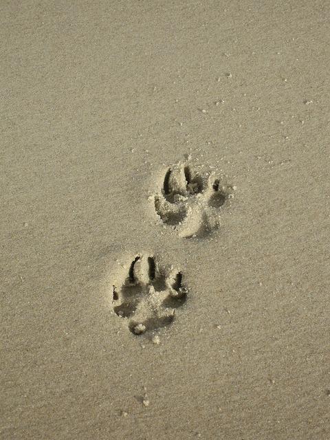 Sand paw paw print, travel vacation.