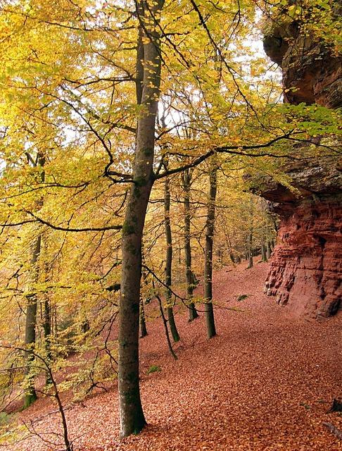 Sand stone sandstone rocks tree, nature landscapes.