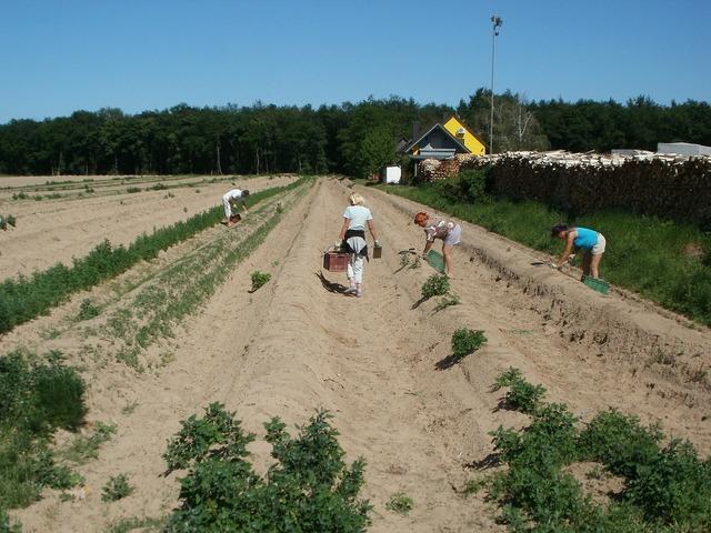 Schwetzingen asparagus harvest, food drink.