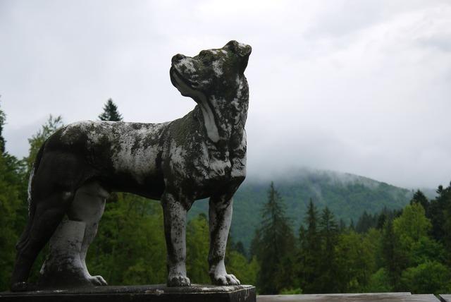 Sculpture dog romania, animals.