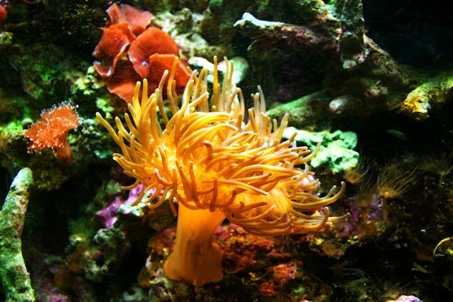 Sea anemone aquarium jellyfish, nature landscapes.
