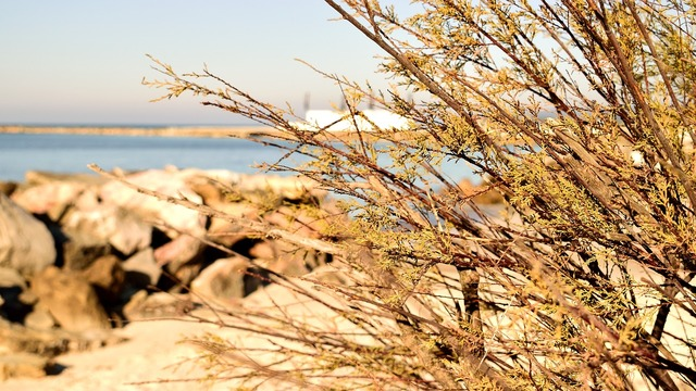 Sea beach scoglio, travel vacation.