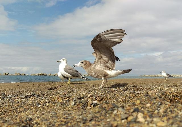 Sea beach sea gull, travel vacation.