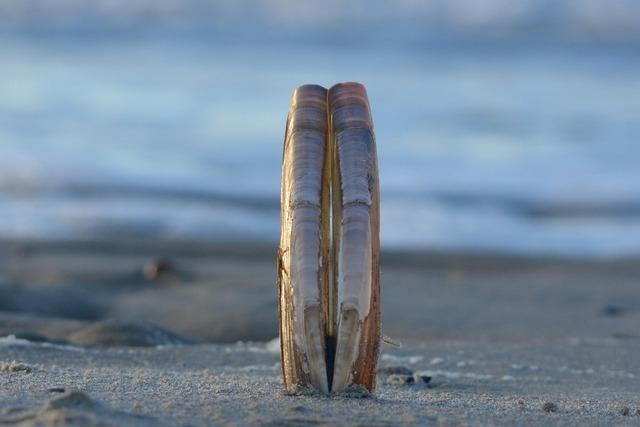 Sea beach shells, travel vacation.