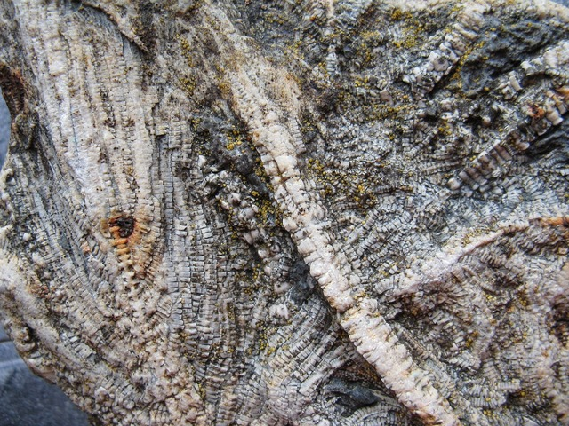 Sea lilies fossils extinct.