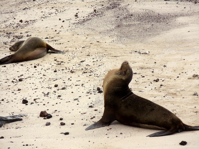 Sea lions beach, travel vacation.