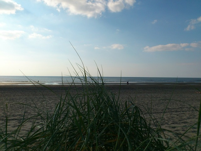 Sea north sea beach, travel vacation.
