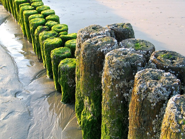 Sea north sea groynes, travel vacation.