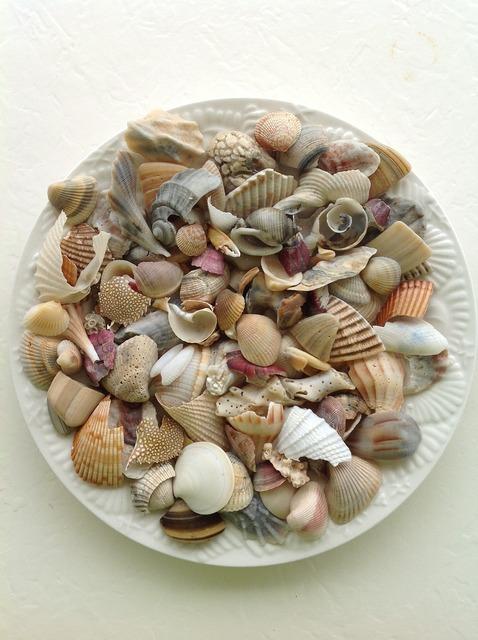Sea shell beach, travel vacation.