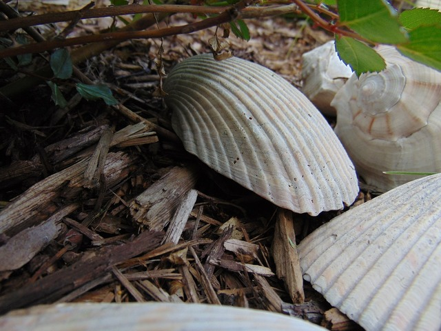Sea shells mulch decorative, nature landscapes.