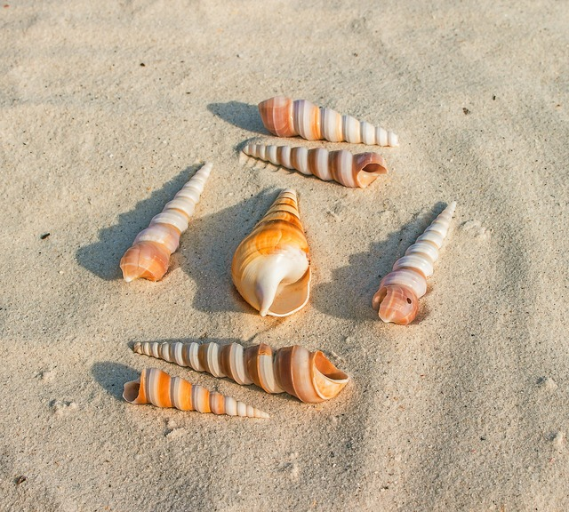Sea shells sand beach, travel vacation.