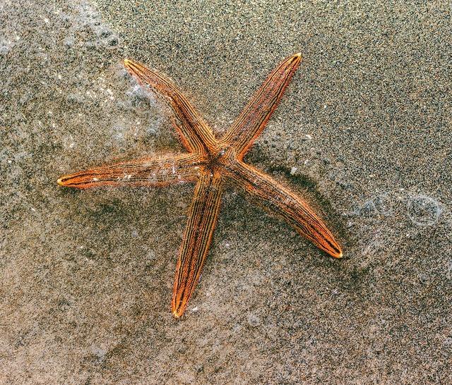 Sea star sand beach, travel vacation.