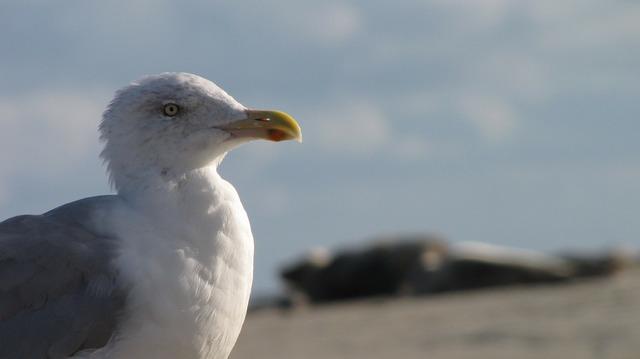 Seagull beach borkum, travel vacation.
