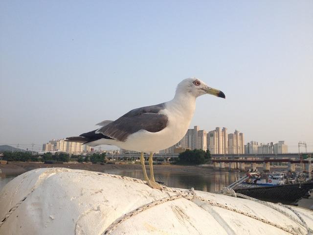Seagull beach new, travel vacation.