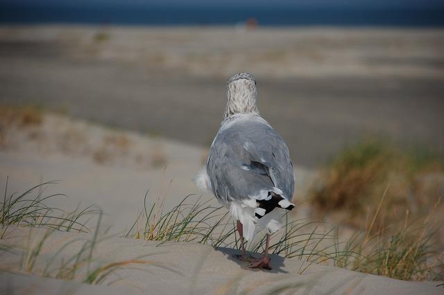 Seagull beach sea, travel vacation.
