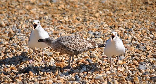 Seagull birds beach, travel vacation.