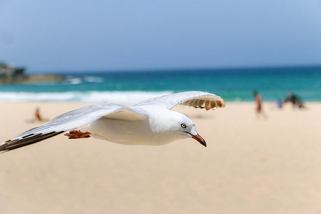 Seagull birds natural life, travel vacation.