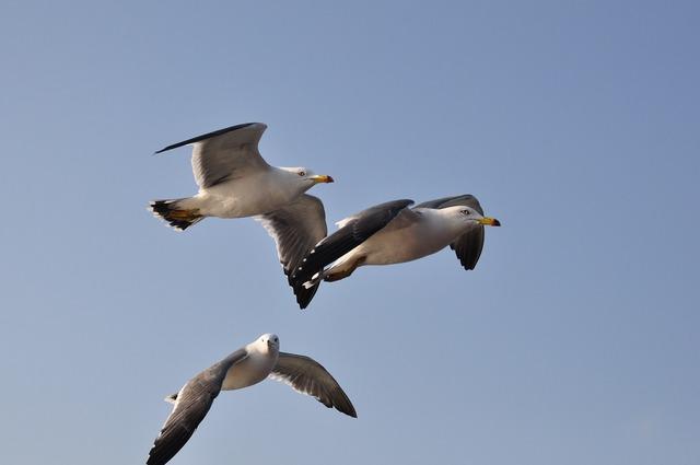Seagull emergency flight, travel vacation.
