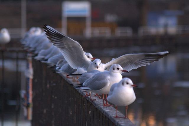 Seagull gulls berlin, animals.
