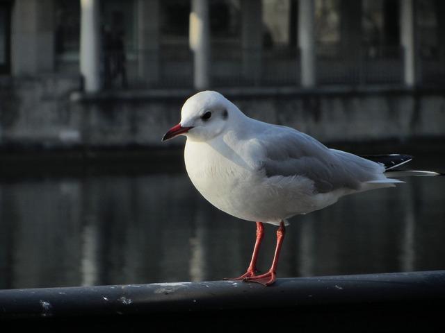 Seagull railing zurich.