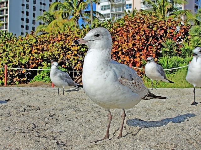 Seagull sand beach, travel vacation.