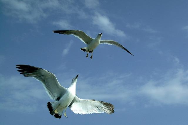 Seagull sea sky, animals.
