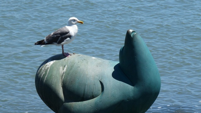 Seagull seal statue, travel vacation.
