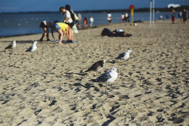 Seagulls birds sand, travel vacation.