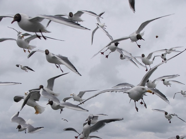 Seagulls birds seagull, travel vacation.