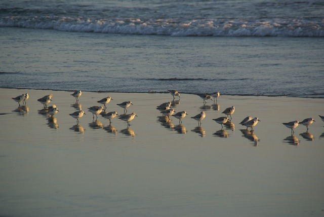Seagulls gulls shore, travel vacation.