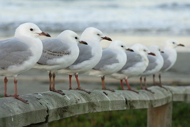 Seagulls row perched, nature landscapes.