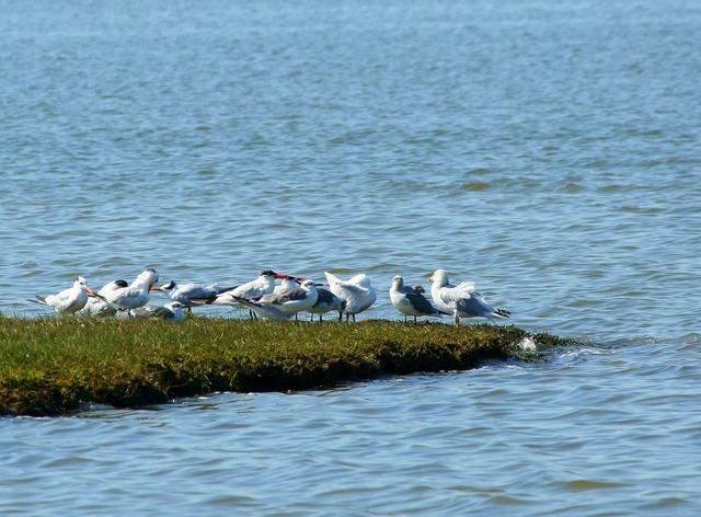 Seagulls terns sea birds.