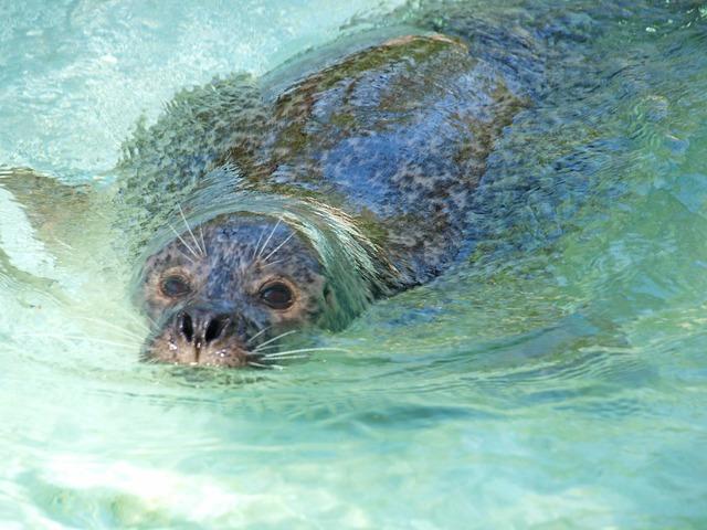 Seal seals north sea, travel vacation.
