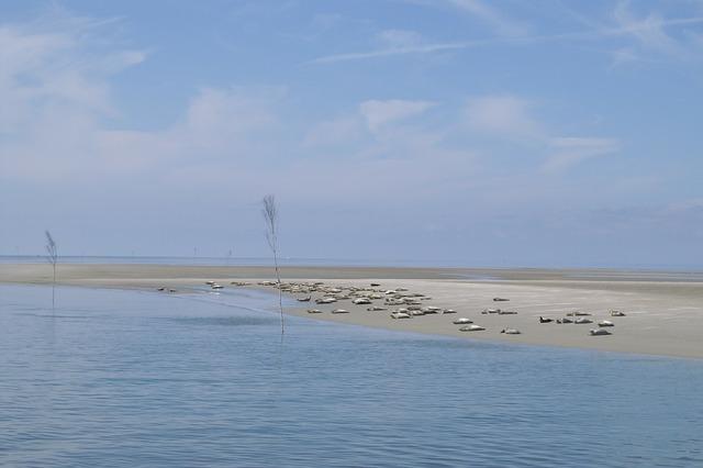 Seals sandbar north sea.