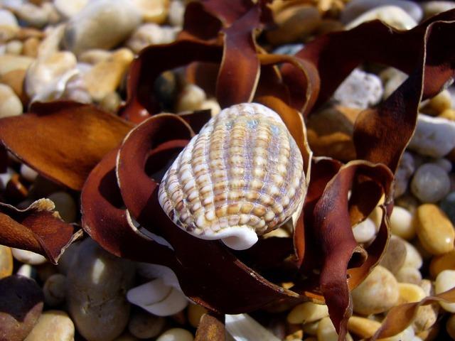 Seashell beach devon, travel vacation.