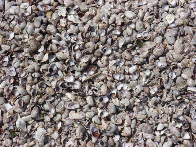 Seashell sand outdoor, travel vacation.