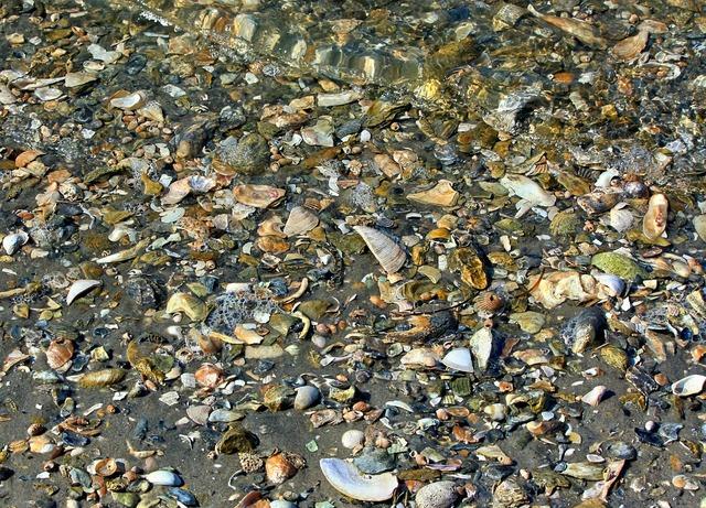 Seashells beach texture, travel vacation.