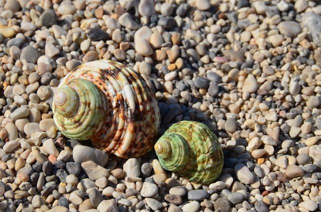 Seashells two beach, travel vacation.