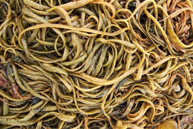Seaweed sea weed, travel vacation.