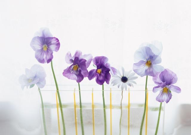See flowers interior hwasaham.