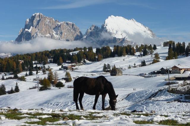Seiser alm sassolungo horses.