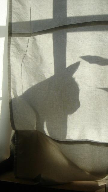 Shadow cat silhouette, animals.