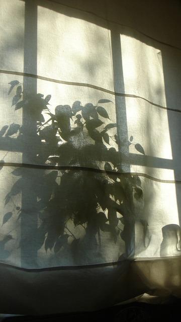 Shadow silhouette plant, nature landscapes.